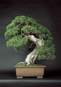 http://www.spoon-tamago.com/wp-content/uploads/2012/01/matsuya-ginza-bonsai-2.jpg