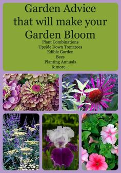 garden advice & tips from 7 passionate & experienced gardeners www.mysoulfulhome.com