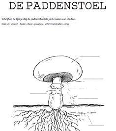 Herfst werkblad de paddenstoel - De juffrouw zegt