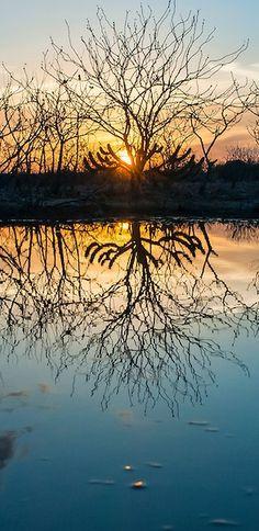Vegetação de caatinga e pôr do Sol refletindo nas águas das primeiras chuvas   Caatinga vegetation and sundown reflecting on the waters of the first rains