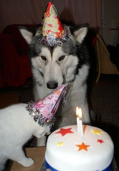 I believe every pet should have its on birthday their family too!