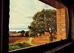 """Screened Nature"" - Umbria - Italia  #photobydperry #loves_united_europe ##wp #Italia_super_pics #ig_italy #italiainfoto #pocket_family #spgitaly #igerslazio #loves_united_italia #ilikeitaly #italia_dev #pocket_Italy #gallery_of_all #total_Italy #loves_united_team #yallerslazio  #italy_hidden_gem #igw_italy #fdnf #europestyle_ #ig_lazio #nikontoday #unlimitedrome #my_rome #thehub_italia #super_roma_channel #lazio_illife #romamore #tv_monuments"