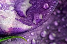 Purple http://macrografiks.com/photo/11249-purple http://8-mark-johnson.artistwebsites.com/featured/purple-mark-johnson.html