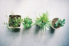 Looking for some good pot-plants to keep in my apartment. These seem pretty cute!