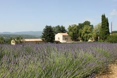 Mas provençal rénové dans cadre paradisiaque Country Roads, Plants, Real Estate, Home, Plant, Planets