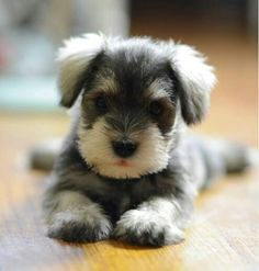 #Beautiful puppy!