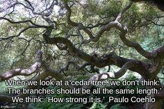 Blue Atlas Cedar Tree Meme Generator - Imgflip