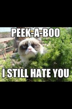 Grumpy Cat is my fave.