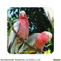 Australian Galah - Roseate Cockatoo Drink Coaster