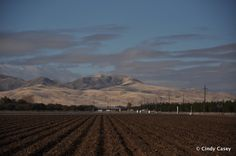 farm in central valley with foothills in background