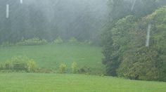Sauwetter / dirty weather  lutz-moeller-jagd.de
