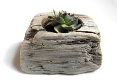 Driftwood Succulent Planter- with more vibrant succulents!
