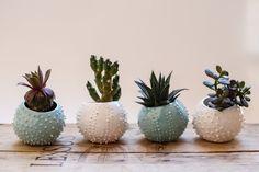 Piccolo a mano ceramica succulenta di OlisCupboard su Etsy