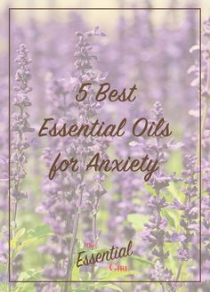 Anxiety can be managed in a number of ways, but essential oils have always been one of the most effective for me. Click through for a list of the 5 best essential oils for anxiety (according to science).