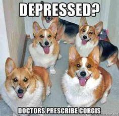 No need to be depressed! #corgilove... YOU NEED CORGIS!!!!!!!!!!!!!