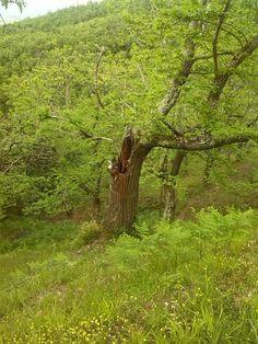 Il vecchio albero cavo