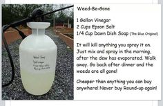 Weed be gone 1gallon vinegar 2 cup epsom salt.  1/2 cup dawn  It will kill anything you spray it on. Spray weeds in the morning after dew has evaporated. Go back after supper, weeds are gone.   Also doubles as a mosquito/flying bugs repellant for your yard.   Bugs can't fly/breathe if they get dawn on them.