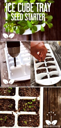 Ice Tray Seed Starter - just remember to punch a couple of holes in the bottom for drainage.
