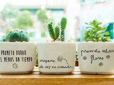 Cacti And Succulents, Potted Plants, Garden Plants, Indoor Plants, House Plants, Decoration Plante, Cactus Y Suculentas, Painted Pots, Do It Yourself Home
