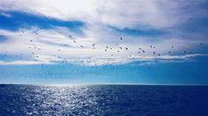 Erie Seabirds.