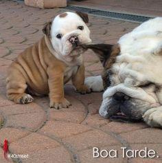 Dog… puppy.  #40st #40STREET #dog #puppies