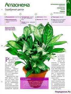 10003 Houseplants, Garden Art, Flowers, Workout, Indoor House Plants, Work Out, Royal Icing Flowers, Flower, Florals