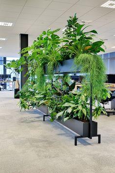 Verdeel een kantoor of ruimte op een gezonde manier dankzij GRØNN's verplaatsbare roomdivider. gevuld met levende groene beplanting dat veel gezonde luchtzuiverende voordelen met zich meebrengt. Een mooie oplossing in tijden van de coronacrisis. #grønn #coronaproofkantoor #groeneplanten #coronaoplossingen #roomdivider #groeneroomdivider #werkafscheiding #coronaproof #plantenwand #coronacrisis #duurzaam #stalendesign #gezondewerkplek #groenkantoor #covid19 #gezondkantoor #groenewerkplek