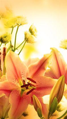 Elegant Orange Lily iPhone 8 Wallpapers