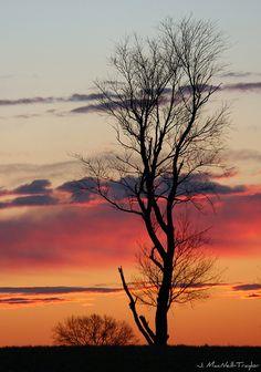 pre-dawn tree {explored}. Photo by Gypsy Mare Studios. #winter