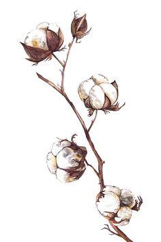 Plant Illustration, Watercolor Illustration, Watercolor Art, Plant Painting, Plant Drawing, Cotton Painting, Ball Drawing, Texture Drawing, Cotton Plant