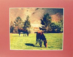 WILD MUSTANG HORSES matted photographic wall decor by PonsArt $30.00