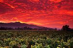 Stormy red dawn sunrise over vineyards near Yountville, Napa Valley, Napa County, California To learn more about the #NapaValley Wine Trolley and our tours click here: https://www.napavalleywinetrolley.com/
