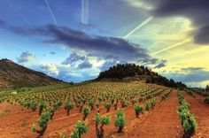 La Rioja rappresenta la regione vinicola per antonomasia della Spagna, patria del re dei rossi di Spagna: il vino de La Rioja. Condizioni orogeografiche ideali, una grande esperienza che viene dalla tradizione e un nobile vitigno, il Tempranillo, fanno della Rioja la culla del vino rosso di qualità superiore.