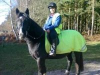 Zena | Welsh Section D Mare Aged 4 | Welsh Ponies & Cobs Showcase