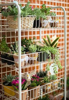 """Coisa mais linda é ter plantas pela casa, não é mesmo, gente? O verde nos dá conexão com a Natureza, esta mãe tão carinhosa e que a vida nas cidades nos deixam tão distantes! Parece que ficamos meio """"no ar"""" sem raízes, quando não vemos uma verdinha crescendo… Por isso vamos ver aqui algumas ideias de como trazer o verde para dentro de casa, mesmo com pouco espaço."""