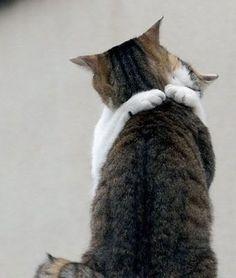 【仲良く一緒におやすみなさい♡】仲良しすぎる猫ちゃん達のハグ画像集5選! | mofmo