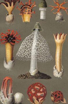 1896 Flowering Mushrooms Original Antique Chromolithograph to Frame