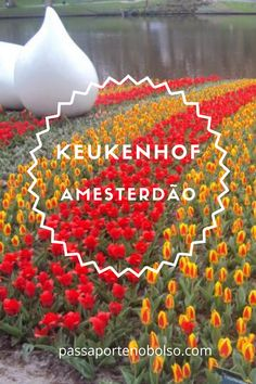 Keukenhof é a maior exposição mundial de tulipas e acontece anualmente no início da primavera. #passaportenobolso #amesterdao #holanda #viagemnaeuropa #ferias #viajar #keukenhof Netherlands, Places To Visit, Messages, Landscape, Travel, World's Fair, Travel In Europe, The Netherlands, Travel Photography