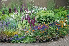 Terrace Garden, Dream Garden, Flora, Garden Ideas, Plants, Gardens, Outdoor Gardens, Landscaping Ideas, Plant