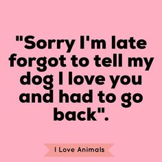 I Love Dogs, Puppy Love, Cute Dogs, Yorkie, Chihuahua, Jiff Pom, Short Haired Pointer, Pet Quotes, Crazy Dog Lady