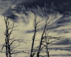Ghost Trees, Clouds, BW
