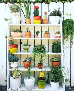 Old bookshelves + potted plants = new l'il vertical garden #jungalowstyle…