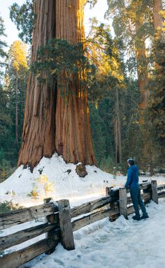 Guide To Visiting Sequoia National Park In The Winter California National Parks, California Travel, Sequoia National Park, Hiking Tips, State Parks, Travel Guide, Things To Do, Trail, Forests