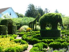 Gardening Topiary ~ The Newport Mansion in Rhode Island: Green Animals