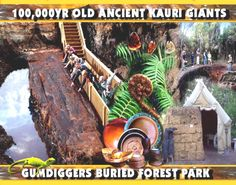 Discover GumDiggers Park - an authentic Kauri gum-digging site and buried Kauri forest attraction located north of Kaitaia New Zealand. Forest Park, Bury, New Zealand, Crafts, Manualidades, Handmade Crafts, Craft, Arts And Crafts, Artesanato