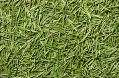 1. Pine needles boost immunity Pine needles are rich in Vitamin C, the vitamin that helps you ward off colds and flu and other seasonal ailments. A tea made from pine needles or spruce and hemlock leaves are excellent for…   [read more]
