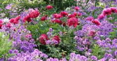 Selten findet man in Gärten den perfekten Boden vor. Vor allem Lehmboden stellt den Gärtner vor eine Herausforderung, ist er doch mühevoll zu bearbeiten und schwer zu bepflanzen. Diese 10 Stauden eignen sich hier besonders.