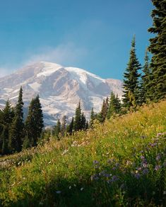MOST SCENIC HIKES IN WASHINGTON STATE