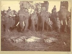 King George V Tiger hunt 1911 Nepal