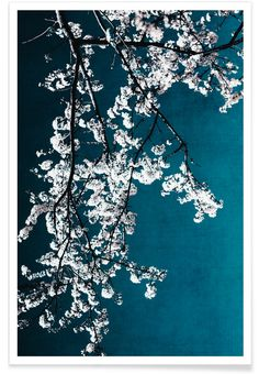 Love the colors - unfortunately a little bit too smal. Flowers - Ingrid Beddoes - Premium Poster